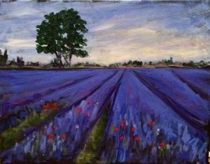 Lavender Field Morning 11 x 14